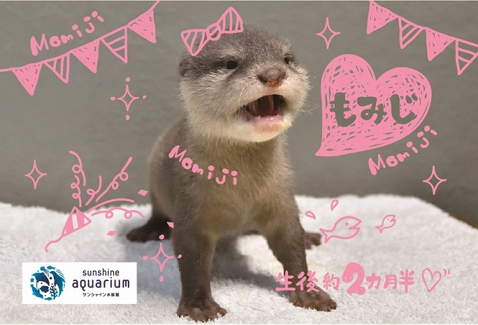 コツメカワウソの赤ちゃんの名前が決定!名前入りポストカードをプレゼントも