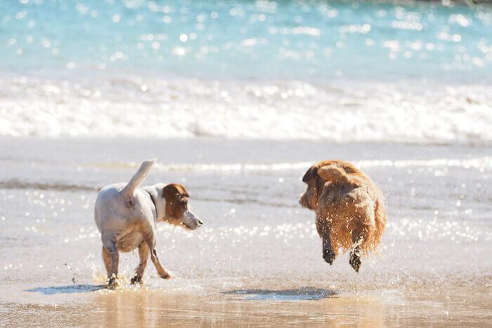 犬の夢はいい予兆?悪い予兆?夢占いではどんな意味があるの?