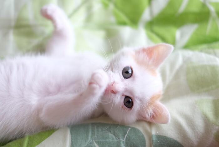 【夢占い】猫が夢に出てくるのどんな意味?パターン別まとめ!