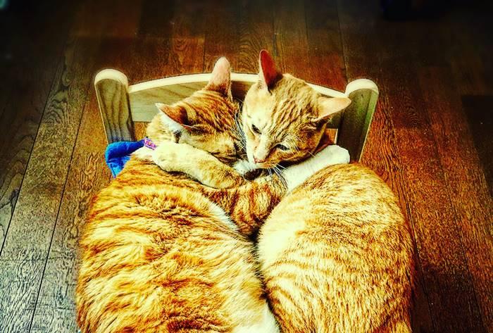 【夢占い】目覚めてドキドキ・・・誰かと抱き合う夢の意味って?