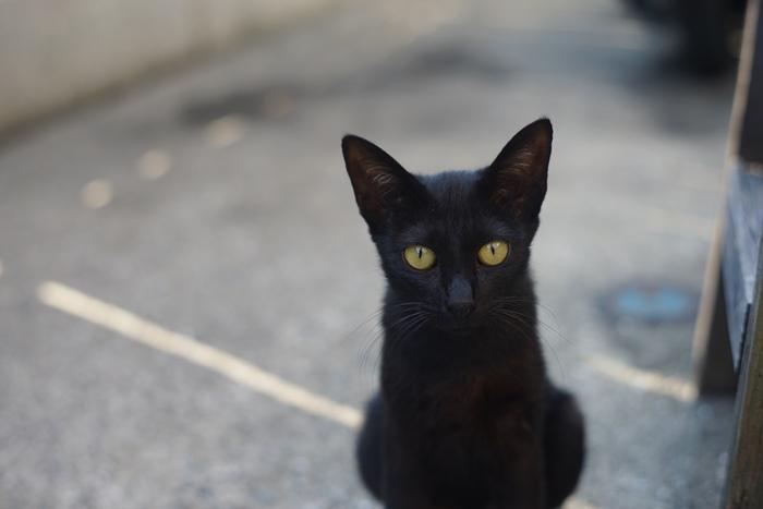 【夢占い】黒猫は幸せの使者?!黒猫が出る夢の意味をチェックしよう