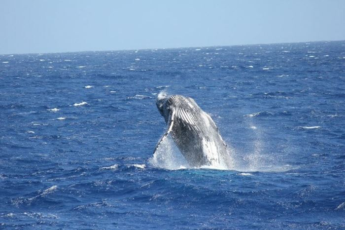 【夢占い】大きな成功を届ける?!クジラの夢が持つ意味とは