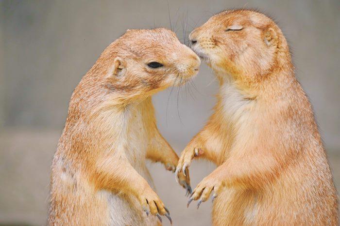 男性はどんな時キスしたい?男性が喜ぶキスの仕方をこっそりチェック♡