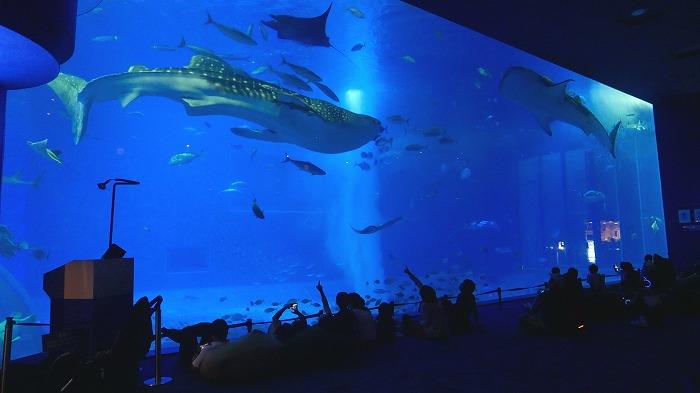 夏の沖縄旅行に!「美ら海ナイトアクアリウム」で夜だけの特別空間を楽しんで
