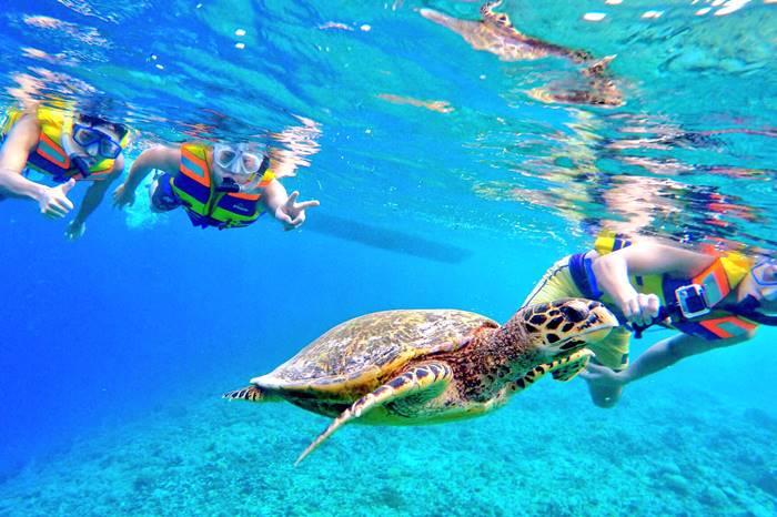 【夢占い】夢で逢えたら超ラッキーな大吉夢!?海亀の夢の意味とは