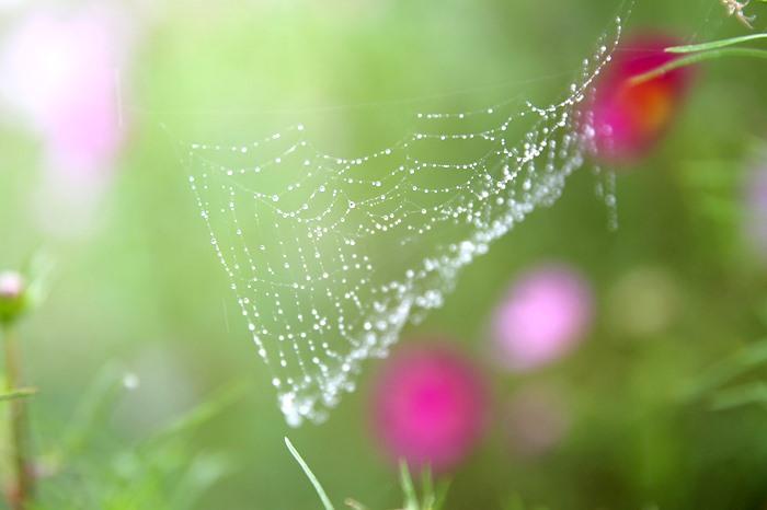 【夢占い】蜘蛛を見たときのあなたの印象がカギ!蜘蛛の夢の意味とは