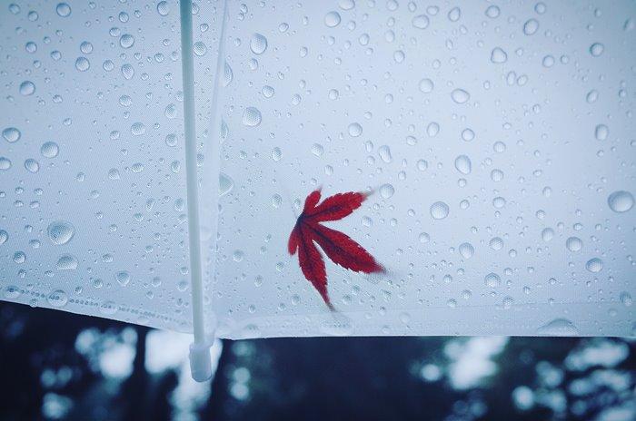【夢占い】幸運の訪れ?それとも・・・雨の夢の意味とは