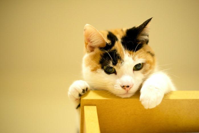【夢占い】毛色や行動をよーく思い出して!猫の夢の意味とは?