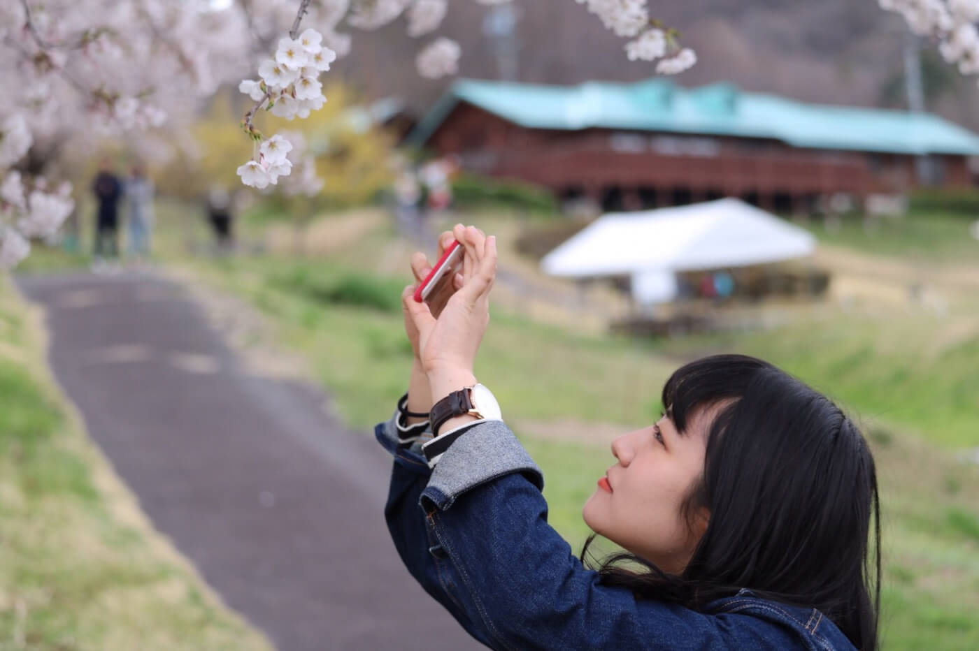 スマホで桜の写真を撮る女性