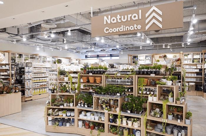 ダイソー プチプラインテリアセレクトショップ「Natural Coordinate」